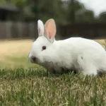 解析八月出生的属兔人命运好吗