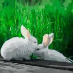 谈谈属兔七月份运势如何