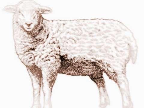 2018年属羊的今年几岁