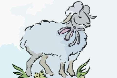 屬羊人2020年生肖運程預測