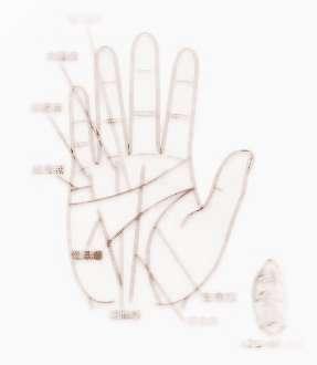 手掌上哪条是婚姻线