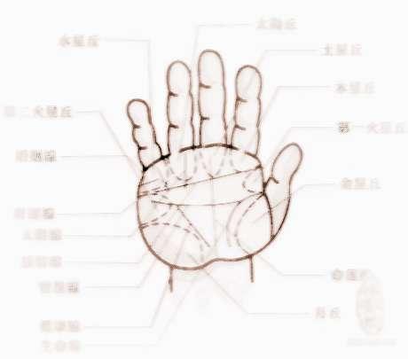 手掌纹路图解