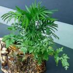办公室风水植物摆放有何讲究