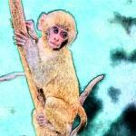 冲太岁化解方法生肖猴 2022年属猴冲太岁化解方法