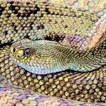 害太岁是什么意思属蛇 生肖蛇2022年财运如何