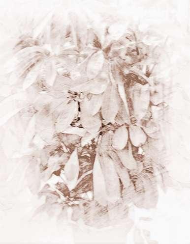 招财树摆放位置图解图片