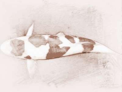十二生肖龙8国际官方网站鱼