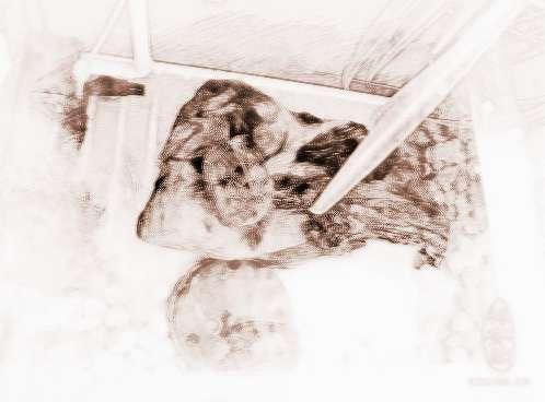 养乌龟风水讲究有哪些注意事项