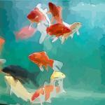 家中養魚能招財 如何養魚才能招財