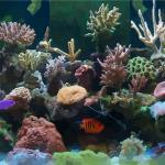 在家里養魚要注意的風水禁忌是什么