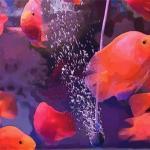 关于养鱼的风水需要注意些什么