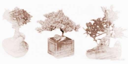 办公桌榕树盆景怎么养