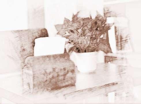 办公室内植物摆放风水