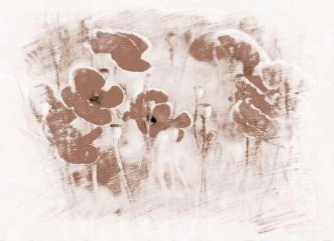 罂粟花的花语什么 罂粟花的寓意