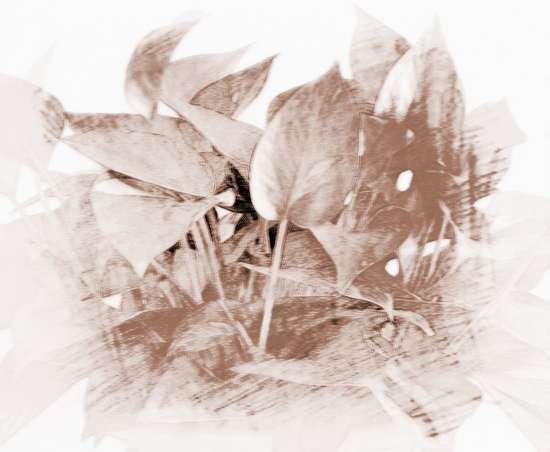 有关客厅植物摆放风水的讲究 客厅植物的摆放常识讲究 1、要注意植物的摆放位置植物的摆放,以不妨碍人们走动为宜;摆放时候还要注意中小搭配,以达到错落有致的视觉效果。 (1)大型盆栽植物,如巴西木、假槟榔、香龙血树、南洋杉、苏铁树、橡皮树等,可摆放在客厅入口处、大厅角落、楼梯旁。