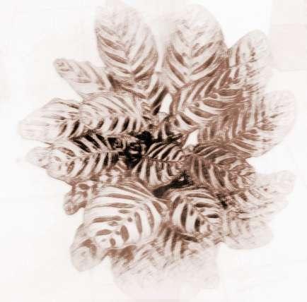 热带植物底纹矢量