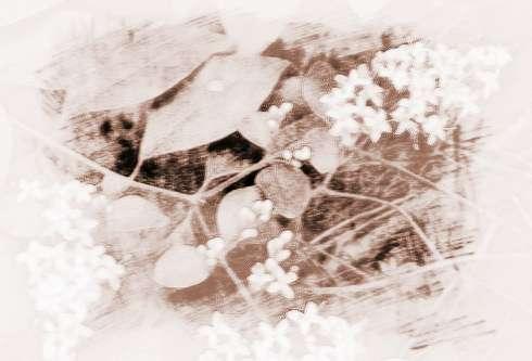 春天发芽的杨树