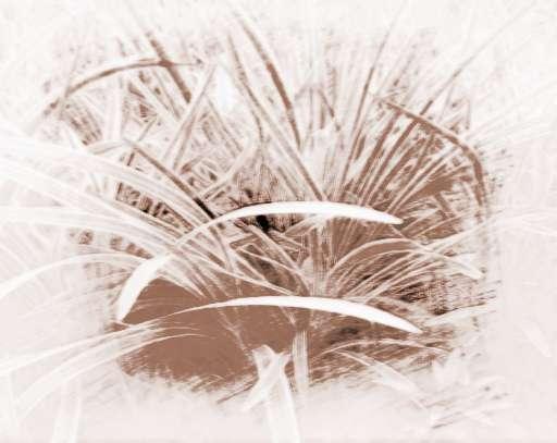 祥安阁风水植物