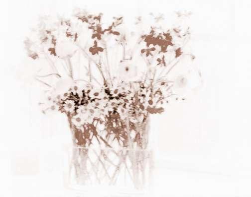 适合在室内养的小植物