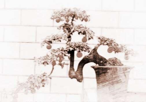 大型室内盆栽植物有哪些
