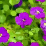 风水开门见花好吗 开门就见到花对风水好吗