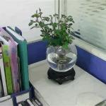 办公桌上摆放风水植物要注意的风水禁忌