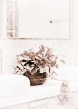 厕所里放什么风水植物