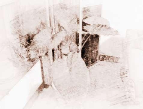 臥室適合養什么植物 根據生肖選臥室植物風水