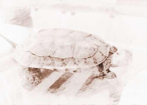 家居养龟风水的讲究