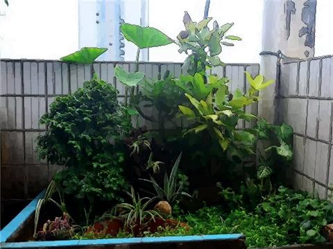 在陽臺種養植物的風水禁忌