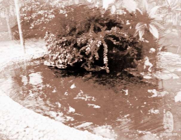 庭院魚池的風水