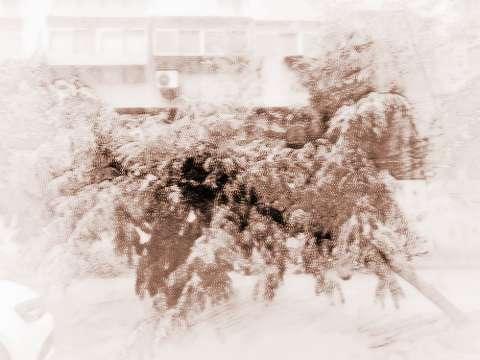 大门前方是否可以栽种树木?注意风水影响