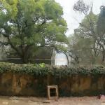 农村住宅门前有这样的树 对住宅风水不利