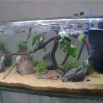 魚缸招財有條件 學會安放家里的魚缸