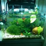 金魚缸擺放有什么風水講究和注意事項