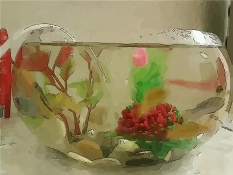 旺财风水:在家中养风水鱼最好是养几尾