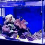 家居风水家里放鱼缸有什么好处呢