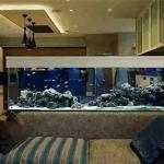 客厅养鱼风水禁忌到底有哪些