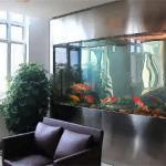 办公室养鱼风水说法 办公室养鱼有何讲究