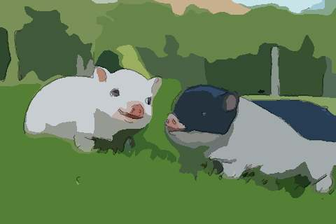 属猪2021年运势及运程如何,2021年属猪人的全年运势