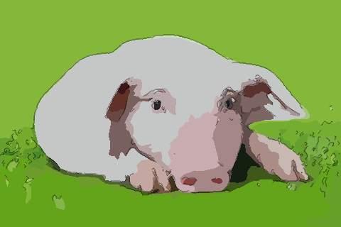 属猪人2021年事业官运