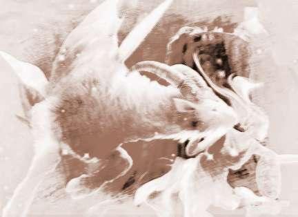 白羊座女生异性缘