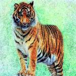 属虎的2022年本命年戴什么