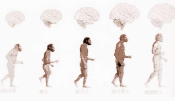 人类的进化过程