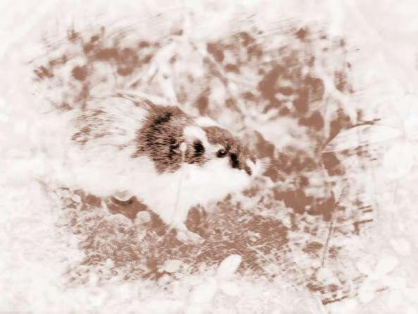旅鼠集体自杀之谜 旅鼠集体跳海自杀是假的吗