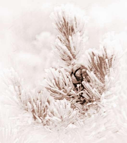 暖在冬日,冬天送围巾的祝福语儿童家具鉴别木松图片