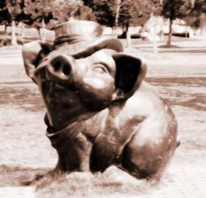 生肖属猪2013年12月运势