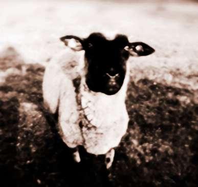 生肖屬羊2013年12月運勢