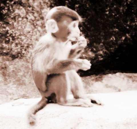 生肖属猴2013年12月运势