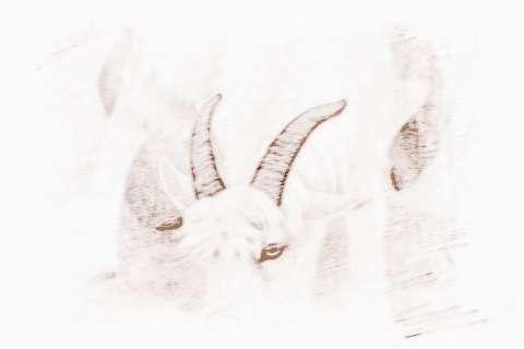 2018年12月生肖羊运势详解_2018年12月生肖羊运势运程
